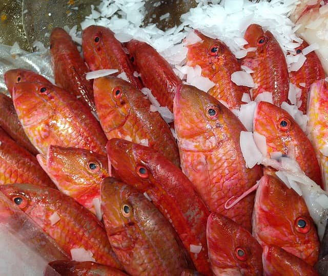 барабулька фото рыба