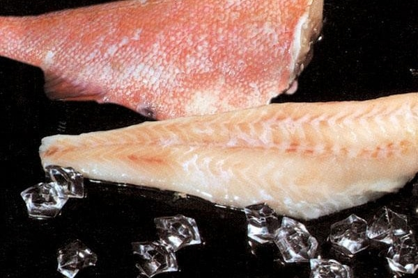 Redfish fillet